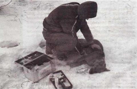 Четвероногие бродяги, МГ от №6 (360) 6 февраля 2014 г.