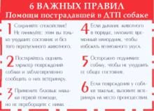 6 важных правил
